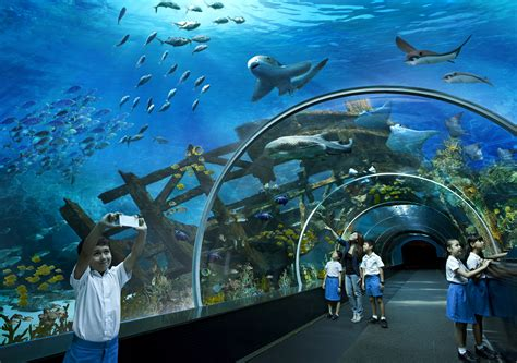 the sea aquarium dome s e a aquarium dolphin island