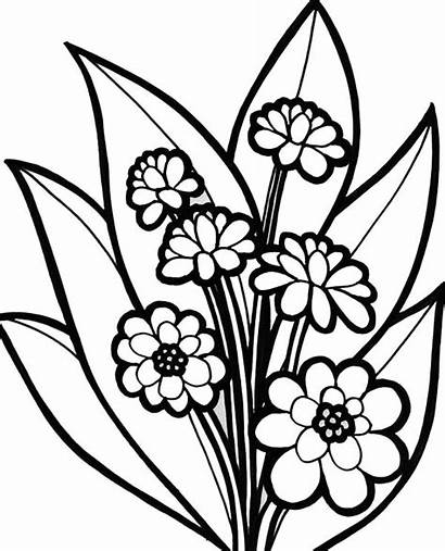 Coloring Flower Plants Blossom Flowers Pages Blooming