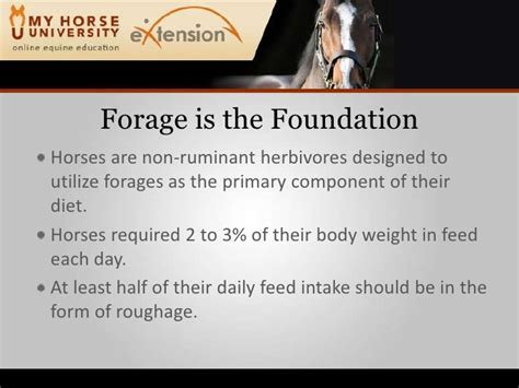 hay storage optimizing feeding martinson ruminant non herbivores horses