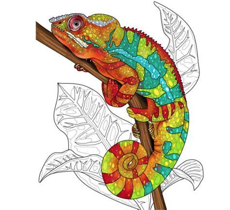 unique sugar gliders chinchillas reptile adult coloring