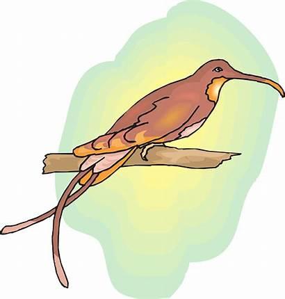 Cendrawasih Burung Batik Deskripsi