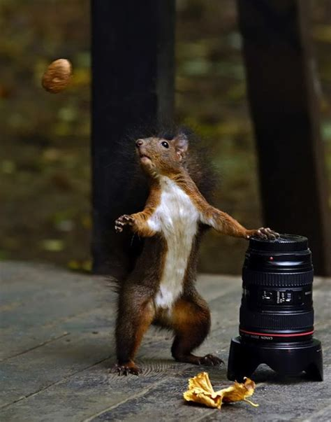 Perfectly timed animal shots | Animals beautiful, Animal ...