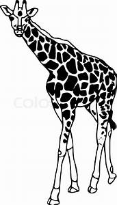 Vector - contour giraffe isolated on white background ...