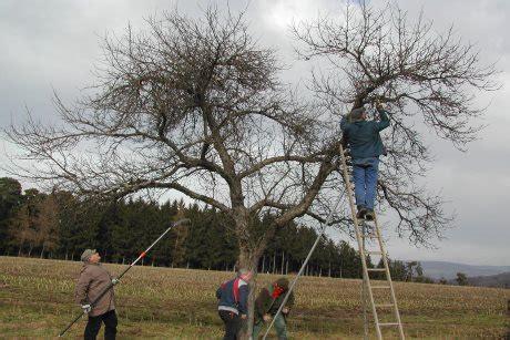 alten apfelbaum schneiden landkreis g 246 ppingen obstb 228 ume fachgerecht schneiden