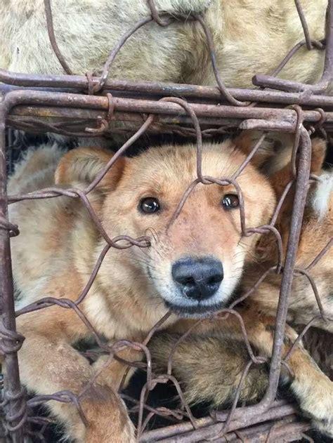 yulin china ideas  pinterest dog abuse