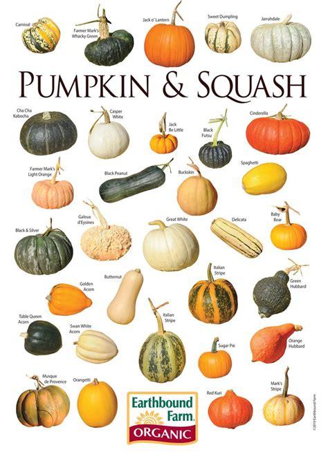 types of pumpkins 17 best ideas about pumpkin squash on pinterest types of pumpkins pumpkin growing and pumpkin