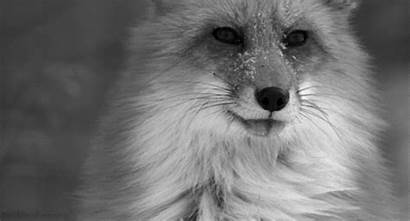 Gifs Nature Awe Earth Inspiring Animal Totally