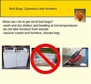 bedbugs and cockroaches With does washing get rid of bed bugs