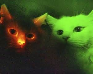 genetically modified cats glow in the cats 12 exles of genetic