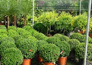 Flower Shop - Outdoor plants - Annivia Gardens in Paphos