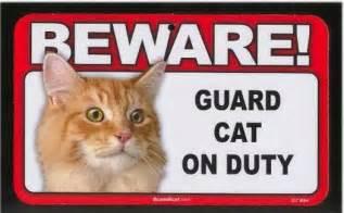 cat guard cctvnerd guard cat and goose