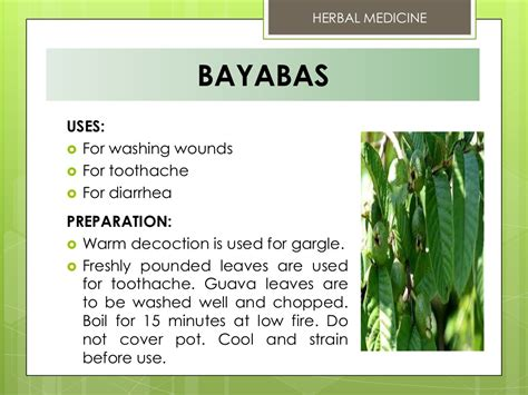 Herbal Medicine Bayabas Uses For Washing Wounds For