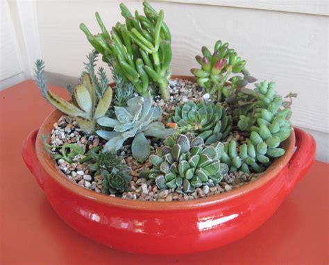 indoor succulent garden ideas succulent garden design