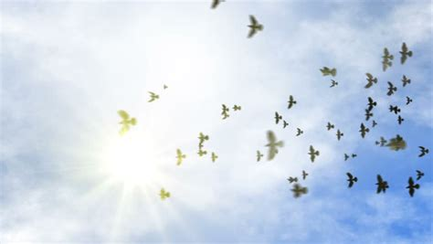 Animated Fly Wallpaper - birds flying stock footage
