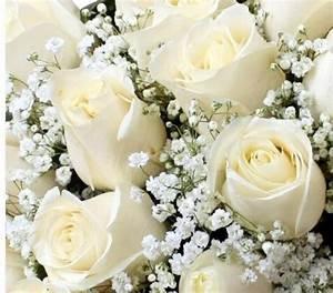 Bouquet Fleurs Blanches : bouquet de fleurs blanches signification photos de ~ Premium-room.com Idées de Décoration