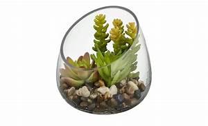 Sukkulenten Im Glas : sukkulente im glas sedum sukkulente m bel h ffner ~ Watch28wear.com Haus und Dekorationen