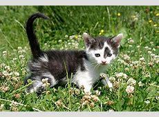 Kleine Katzenrassen und die kleinste Katze der Welt