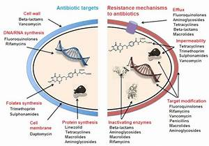 Antibiotics  Antibiotic Resistance And Environment