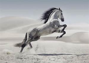 Bilder Von Pferden : a la ferme le cheval est malade ~ Frokenaadalensverden.com Haus und Dekorationen