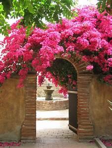 Forum Deco Moderne : d co jardin arbuste ~ Zukunftsfamilie.com Idées de Décoration