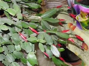 Plante Fleurie Intérieur : plante grasse d interieur fleurie photos de magnolisafleur ~ Premium-room.com Idées de Décoration