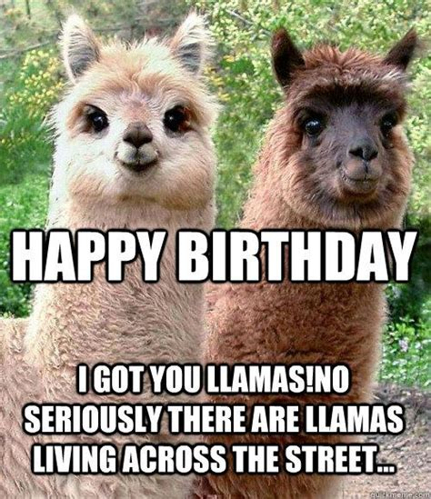 Llama Birthday Meme - 22 best images about llama on pinterest jokes birthdays and happy birthday