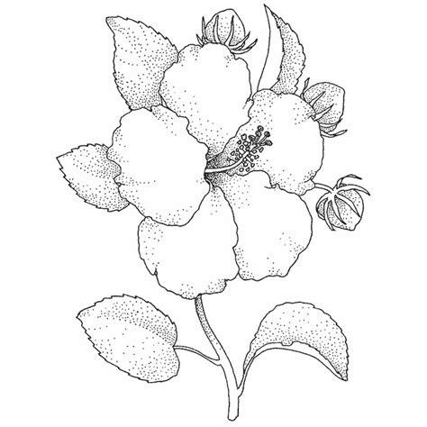 coloriage a imprimer gratuit free coloring pages of flores lilis