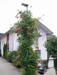Mediterrane Bäume Winterhart : mediterrane pflanzen perfekt imitiert mein sch ner garten ~ Frokenaadalensverden.com Haus und Dekorationen