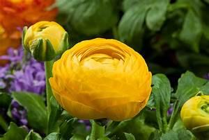 Was Sind Frühlingsblumen : fr hlingsblumen bild foto von katerfippy aus bl ten kleinpflanzen fotografie 30482882 ~ Whattoseeinmadrid.com Haus und Dekorationen