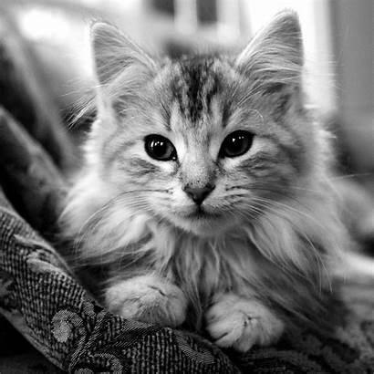 Cat Wallpapers Cats 1080p Ipad Face Kittens