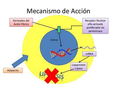 Cytotec And Xanax Mecanismo De Accion Del Medicamento Lasix Citalopram 40 Mg