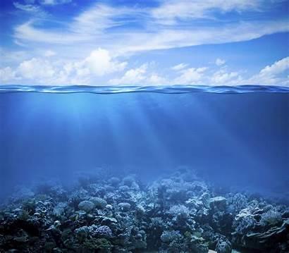 Underwater Under 4k Reef Sea Coral Ocean