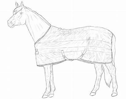 Blanket Horse Deviantart