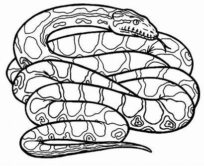 Snake Coloring Anaconda Pages Draw Drawings Animals