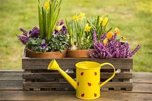Blumen Im Frühling : der april macht was er will es bleibt wechselhaft wetter am wochenende hamburg zwei das ~ Orissabook.com Haus und Dekorationen