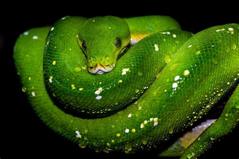 python boa emerald closeup tree code functional lights under dark