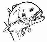 Trout Template Fishing Coloring Pages Sketch sketch template