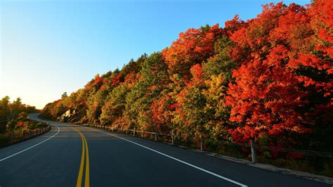 Trees Landscape Road Wallpapers Hd Desktop And Mobile