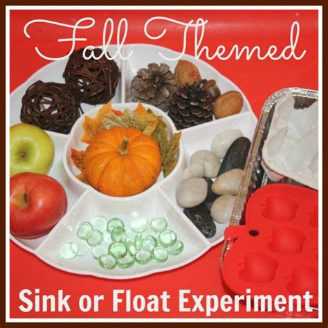 sink or float experiment fall sink float science activity from little bins for