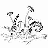 Coloring Mushrooms Ferns Printable Twig Varens Pilze Drawn Getrokken Champignons Mushroom Kleurplaten Afdrukbare Growing Paddestoelen Volwassenen Colorear Stockillustratie Eps Felci sketch template