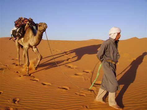 cuisiner des patates flowersway voyages loisir le désert à pied avec un chameau