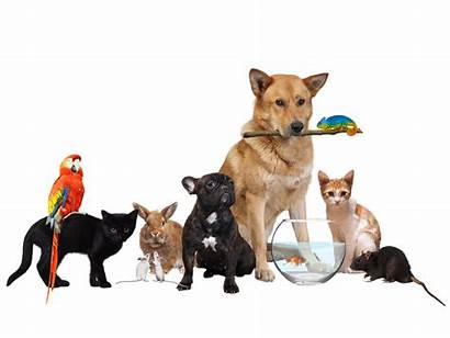 Pets Moving Date Transition Diverse Movers Mixed