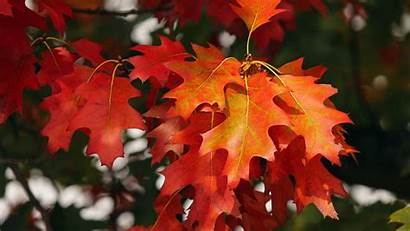 Leaves Autumn 4k October Background Uhd
