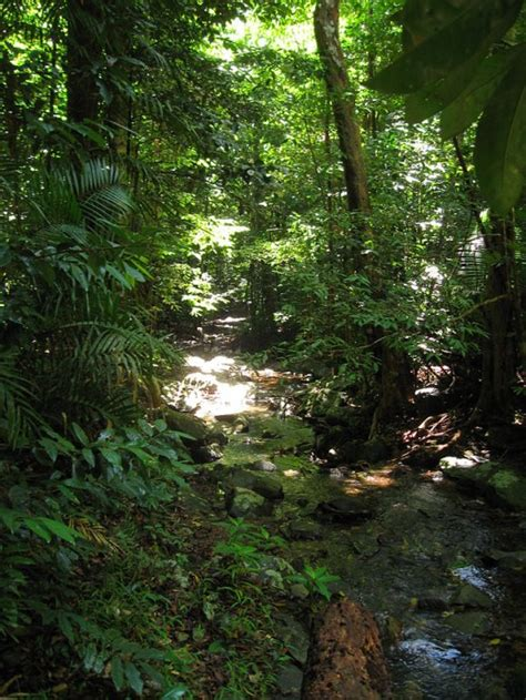 mother earth  healing effects  rainforests