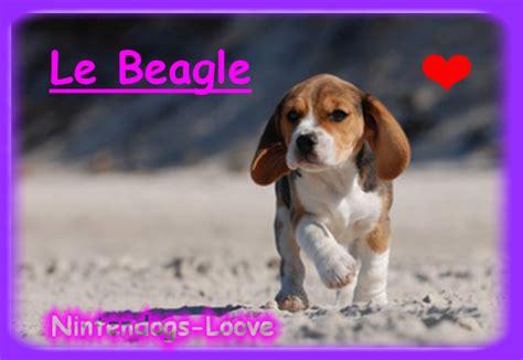 le beagle ils nous sont si chers