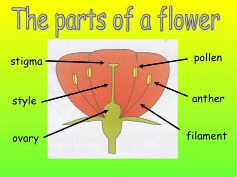 parts   flower