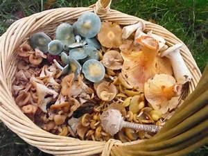 Pilze Auf Komposthaufen : pilzticker bawue 2 baden wuerttemberg 2 bis ~ Lizthompson.info Haus und Dekorationen