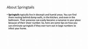 how to get rid of springtails in bathroom 28 images With how to get rid of springtails in bathroom