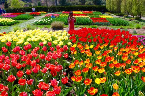 Longwood Gardens Tulips, Spring Into Kennett Square