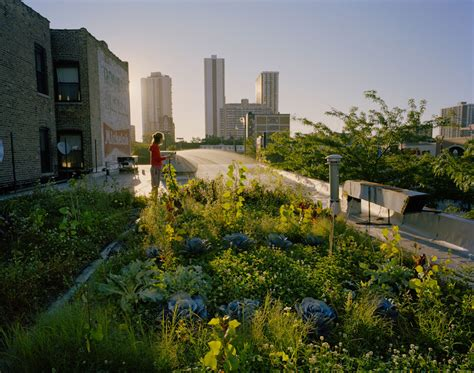 green roofs cook jenshel photography
